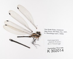 specimen-of-dragonfly